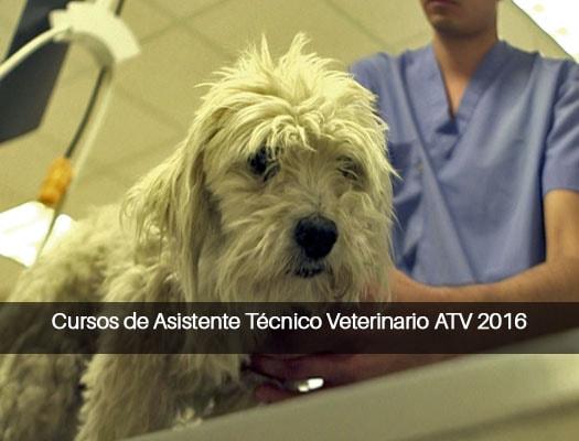 CURSOS DE ASISTENTE TÉCNICO VETERINARIO ATV 2018